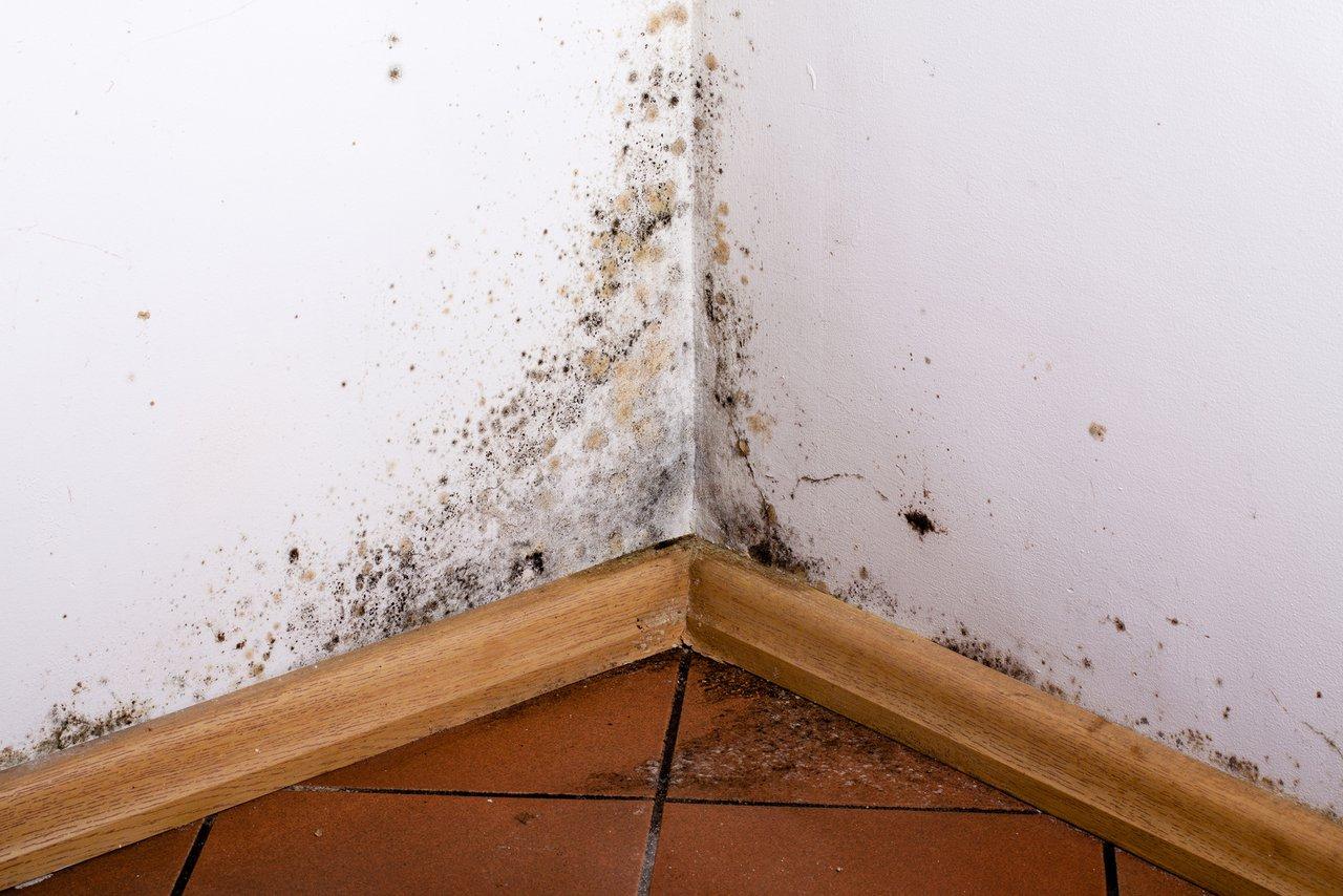 Feuchte Wände? Wir helfen bei Ursachensuche und Sanierung! - Philip ...